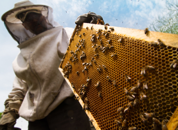 New Jersey Beekeepers Say Proposed...