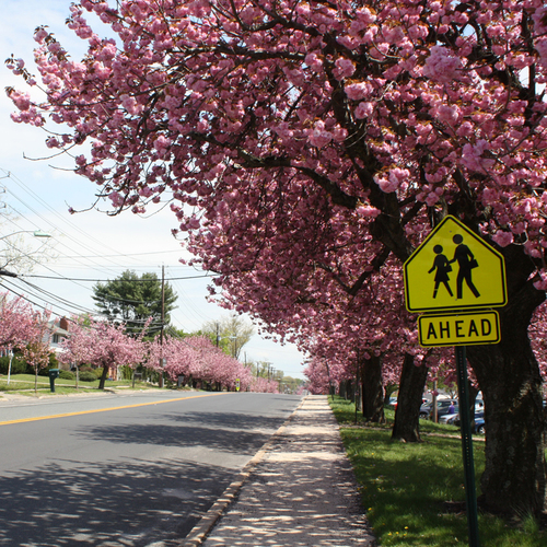 South Jersey Spotlight: Cherry Hill