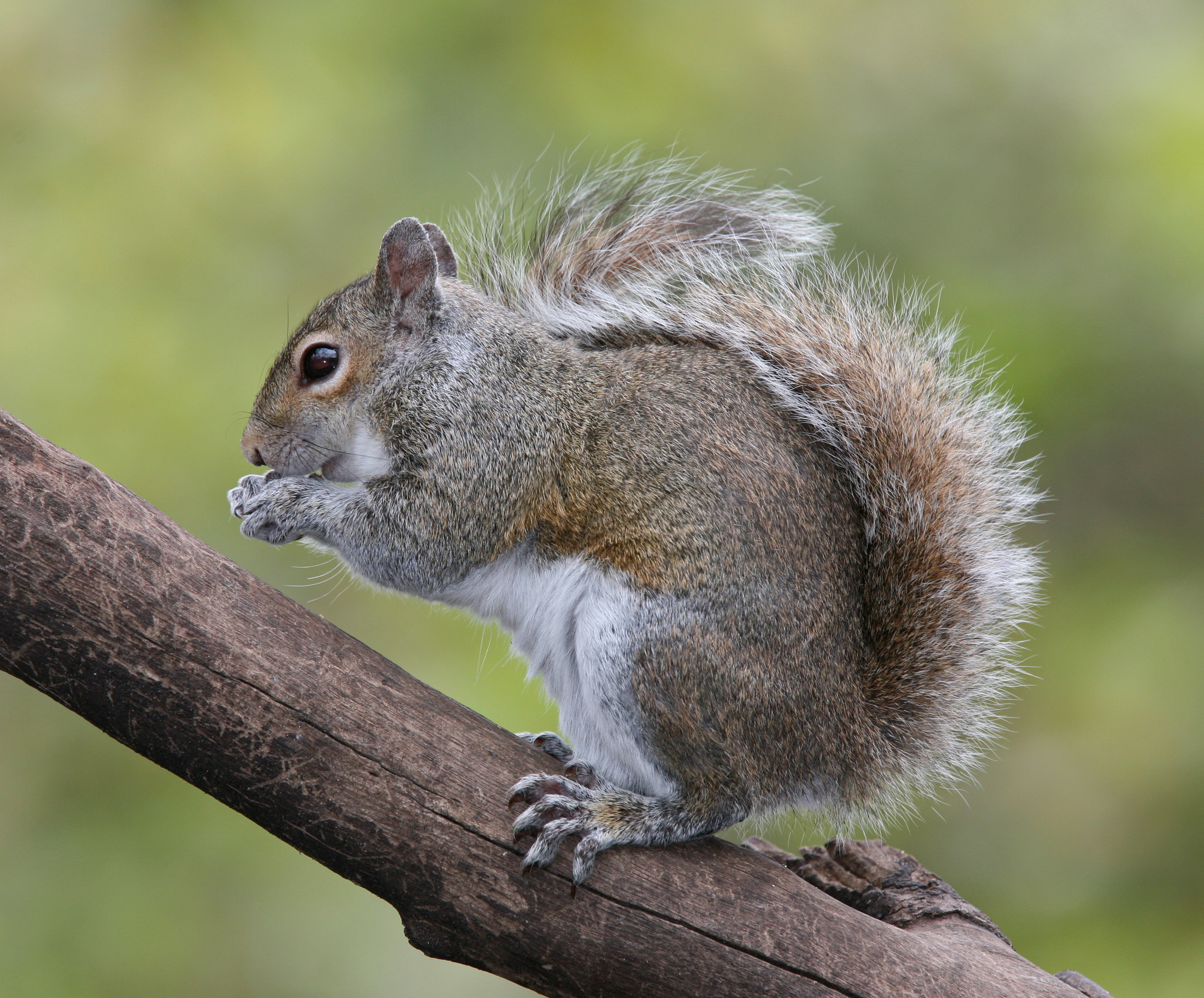 First Annual 'Family-Friendly' Squirrel Hunting Competition Causing Uproar In South Jersey