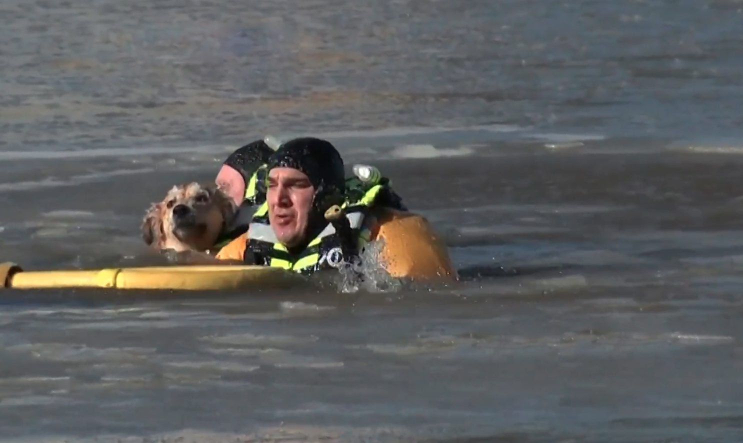 Video Shows Daring Rescue Crews Swimming Through Freezing Water To Save Stranded Dog's Life